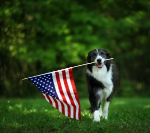 Put Out Your Flag What to Consider When Buying Decorative Flags and Markers